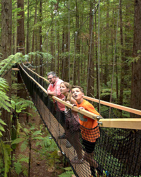 Redwood Treewalk