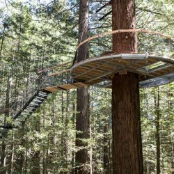 Canopy Bridges